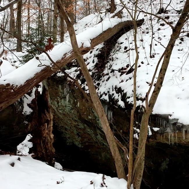 Walk In The Woods (snowy)